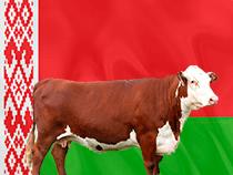 белорусская говядина